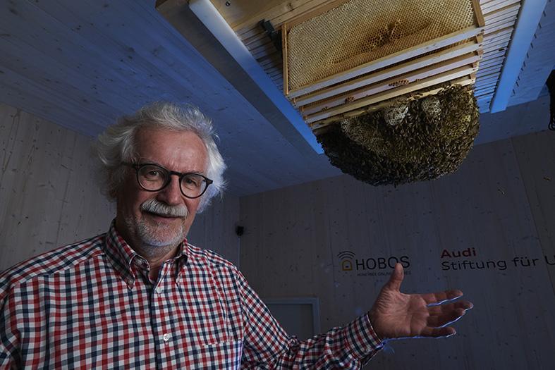 Pr. Jurgen Tautz, experimental hive. Jurgen Tautz, ruche experimental