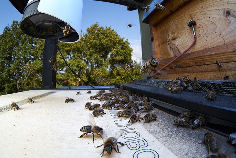 Hobos experimental hive- Ruche expérimental HOBOS